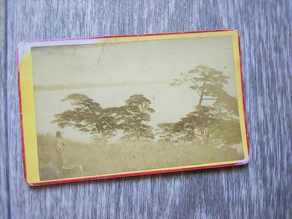 【古写真の調査後売却】隅田川か?河川と松の木のある風景(鶏卵紙、台紙貼付)